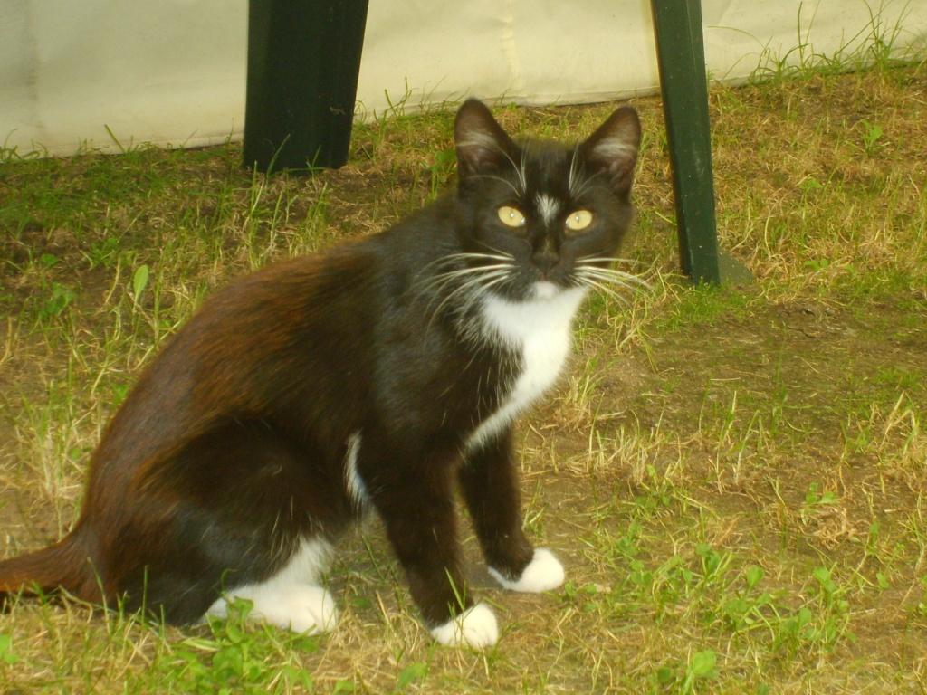 Gartenmobel Zu Verschenken In Koln : Kater Zu Verschenken Katzen Pictures to pin on Pinterest