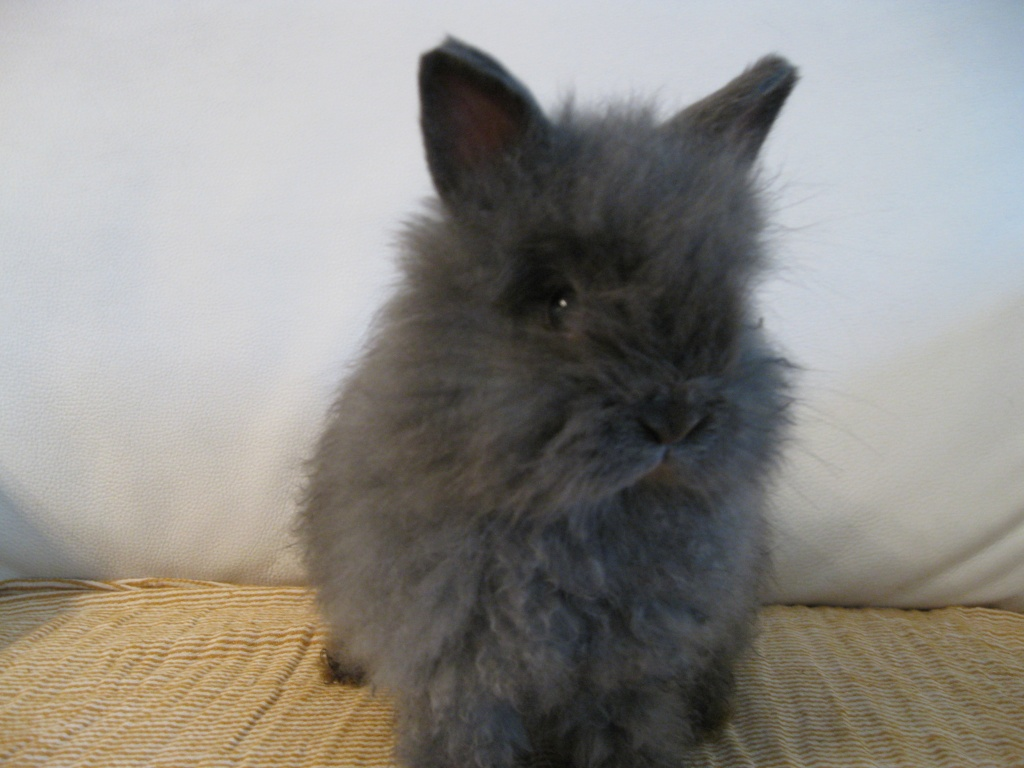 Zebra Gartenmobel Lounge : Drei niedlichen Kaninchen (5 Monate) in liebe Hände zu verschenken!