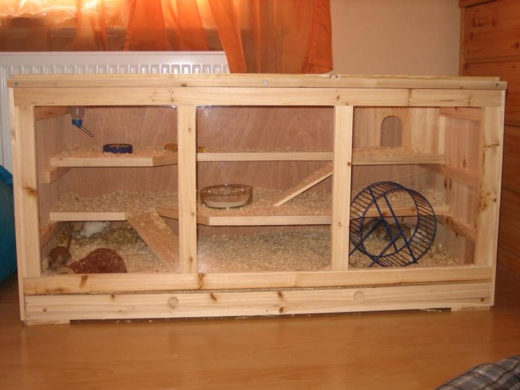 tieranzeigen kleinnager kleinanzeigen. Black Bedroom Furniture Sets. Home Design Ideas
