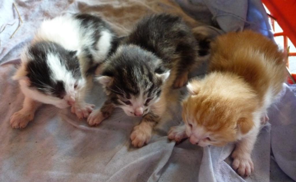 Katzen Kostenlos Abzugeben