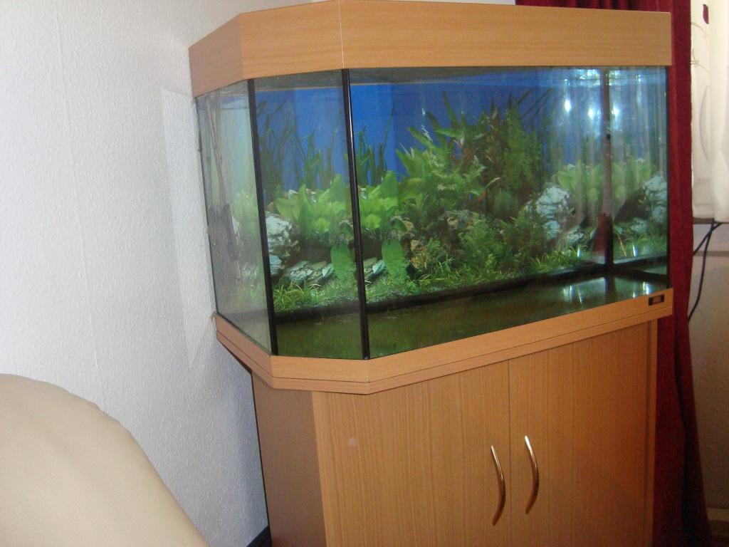 Fische - Aquarien Tieranzeigen Seite 12