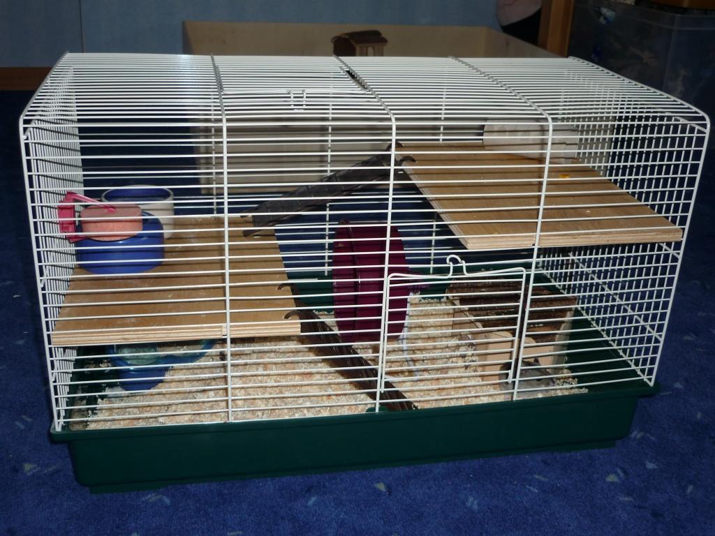 dsungarischer zwerghamster mit k fig abzugeben hamster. Black Bedroom Furniture Sets. Home Design Ideas
