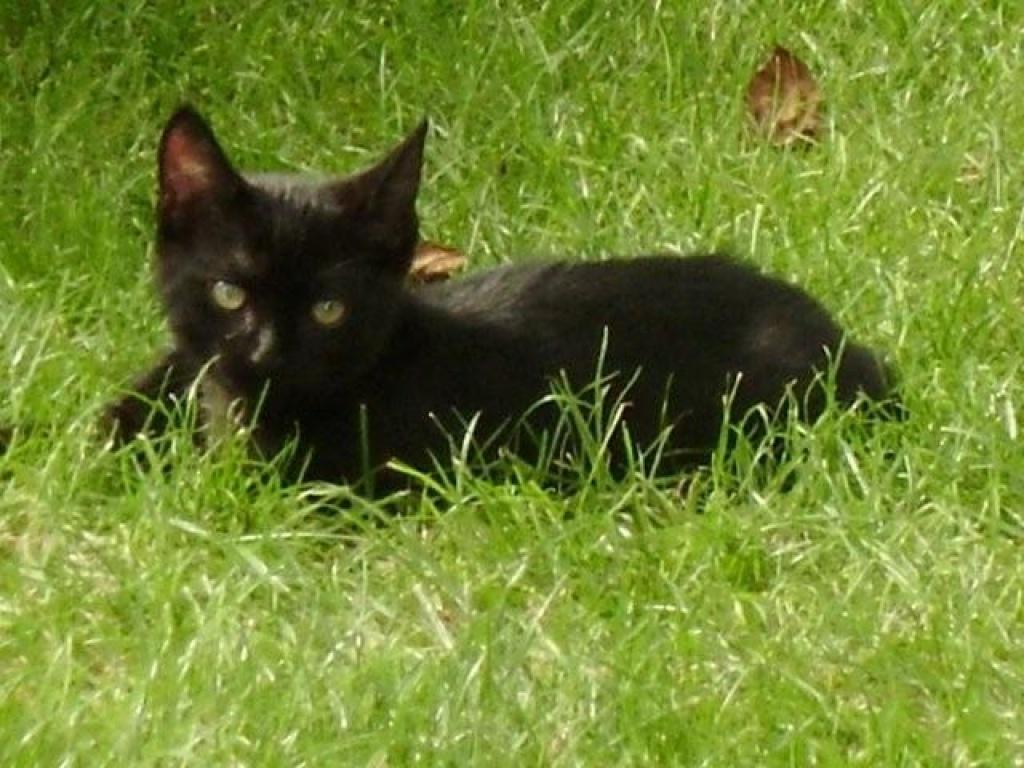 Black Warrior Cats