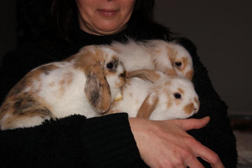S 252 223 E Kaninchenbaby 180 S In Liebevolle H 228 Nde Abzugeben 8 Wochen Alt Kaninchen