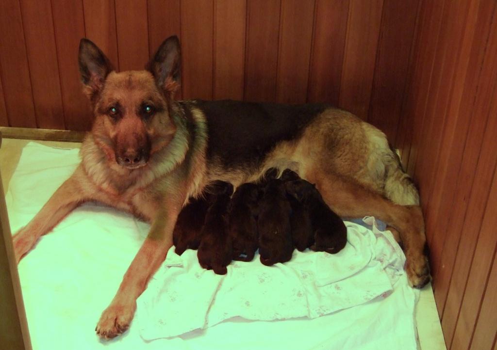 tiere junge hunde kaufen