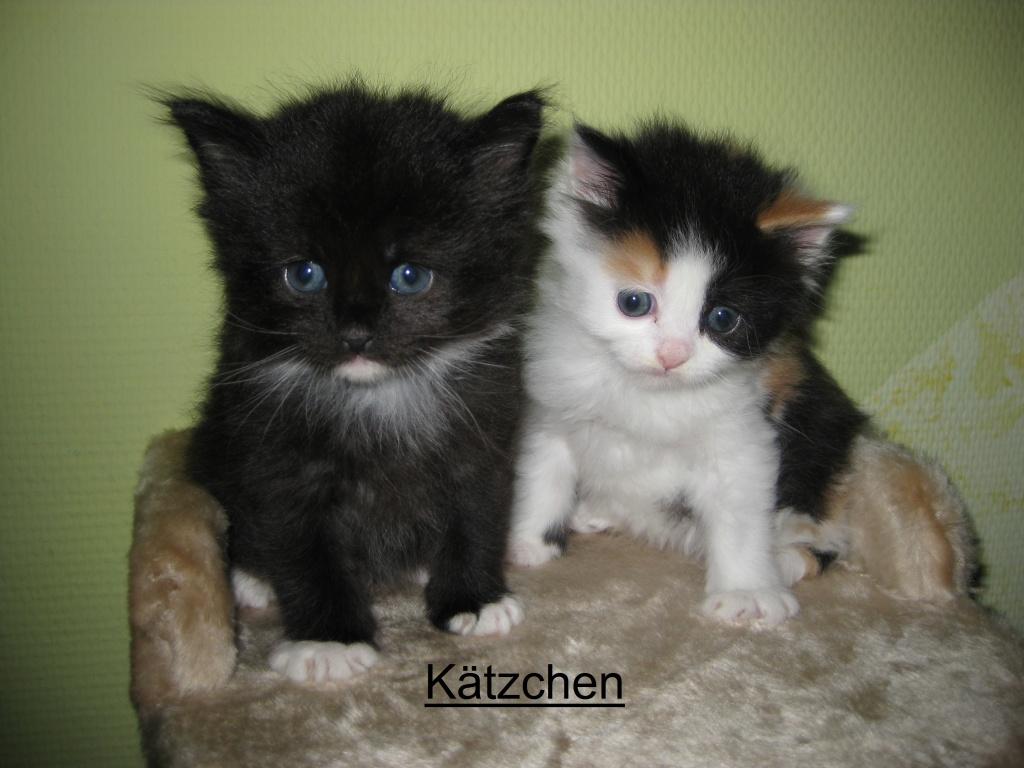 Katzen Mischlinge Tieranzeigen Seite 13
