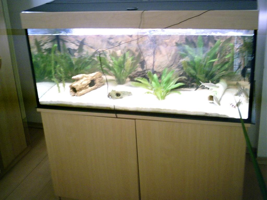 Aquarium 350 liter 4 monate alt unterschrank heizung for Aquarium 350 litres