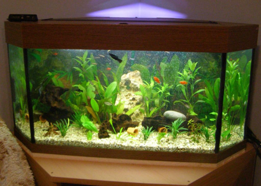 fische aquarien tieranzeigen seite 19. Black Bedroom Furniture Sets. Home Design Ideas