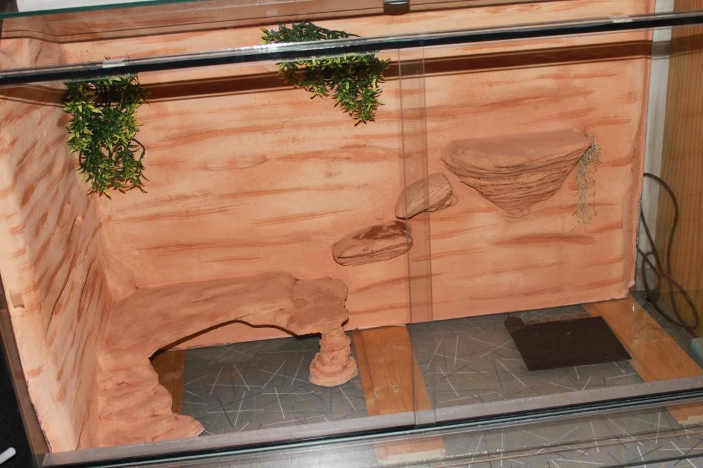 Reptilien terrarien tieranzeigen seite 3 - Terrarium ruckwand selber bauen ...
