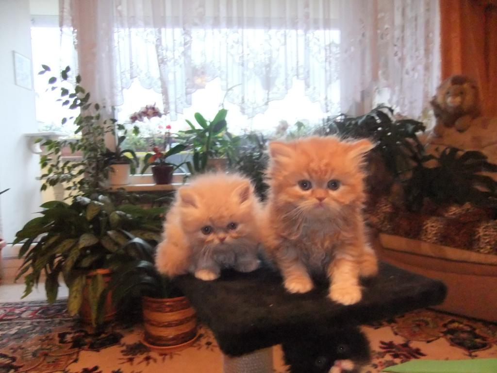 tieranzeigen katzenbabys kleinanzeigen. Black Bedroom Furniture Sets. Home Design Ideas