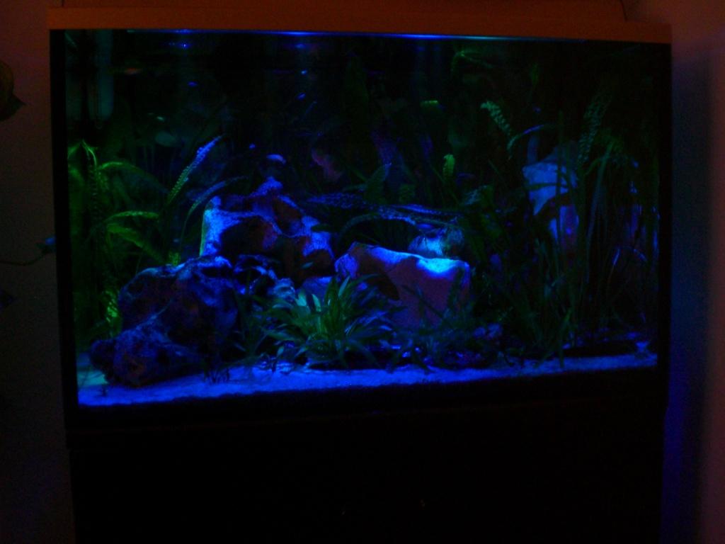 aquarium komplett 160 liter abdeckung unterschrank filter uv kl rer le aquarien. Black Bedroom Furniture Sets. Home Design Ideas