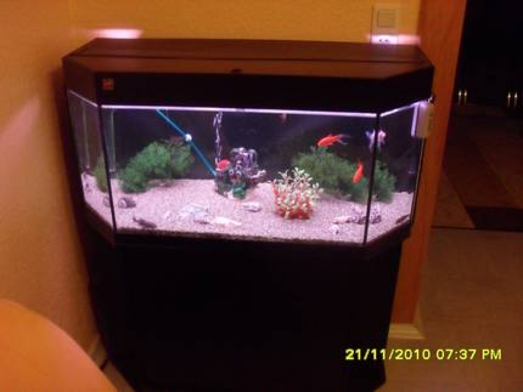 aquarium mit zubeh r aquarien. Black Bedroom Furniture Sets. Home Design Ideas