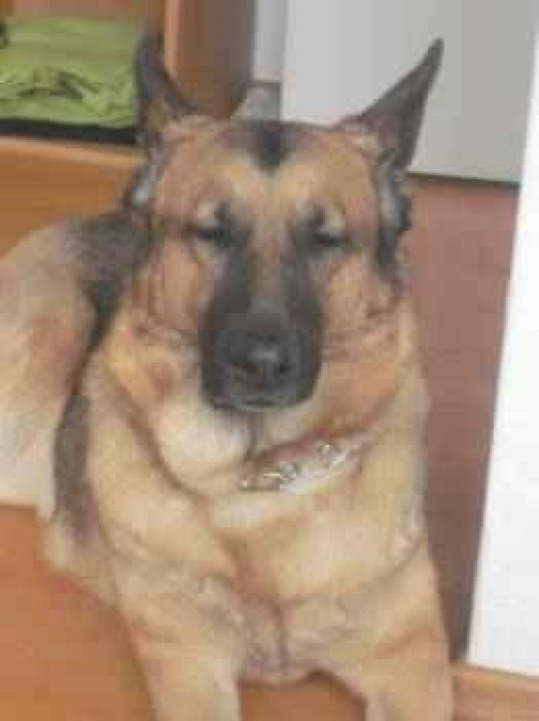 Hunde zu verschenken in papenburg