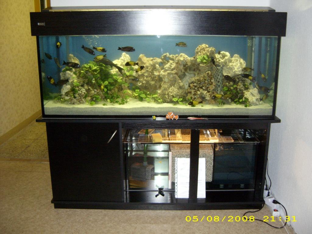 Fische  Aquarien Tieranzeigen Seite 4