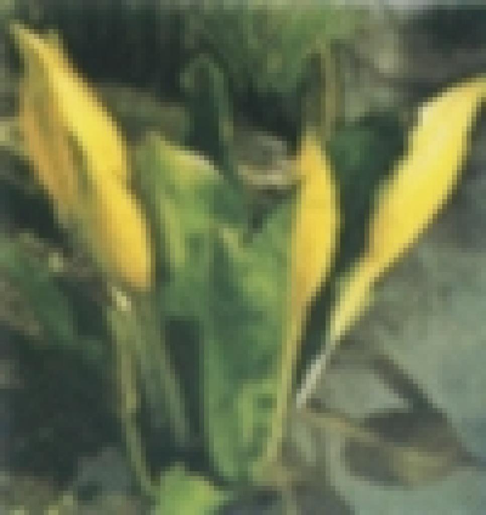 Tieranzeigen teichfische kleinanzeigen for Teichfische schwarz