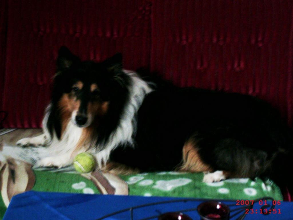 Verschenken in papenburg hunde zu Hund dringend