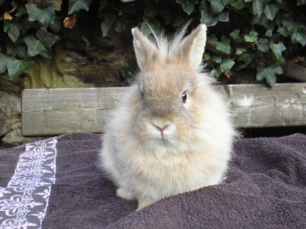 S 252 223 Es Kaninchen L 246 Wenkopf Aus Au 223 Enhaltung Ca 5 Monate Alt Kaninchen