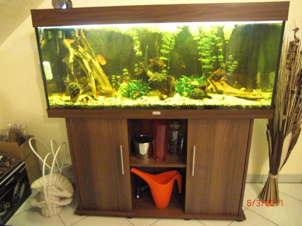 komplett aquarium juwel rio 240 liter dunkelbraun inkl. Black Bedroom Furniture Sets. Home Design Ideas