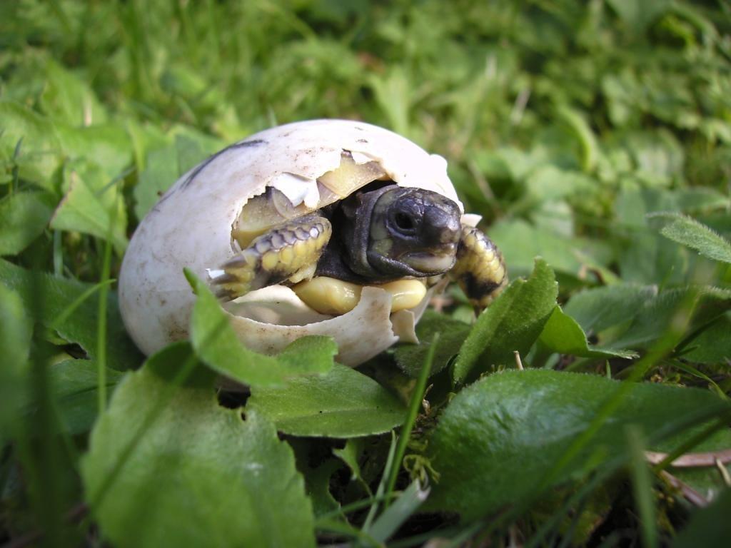 Kleiner Kühlschrank Für Schildkröten : Tieranzeigen schildkröte kleinanzeigen