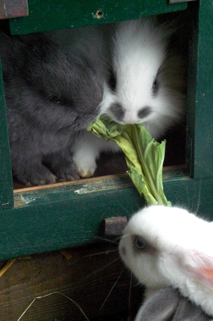 Nagetiere Kaninchen Tieranzeigen Seite 13