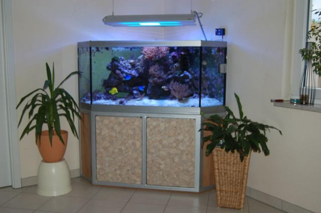 Meerwasser aquarium eckbecken aquarien for Salzwasser aquarium fische