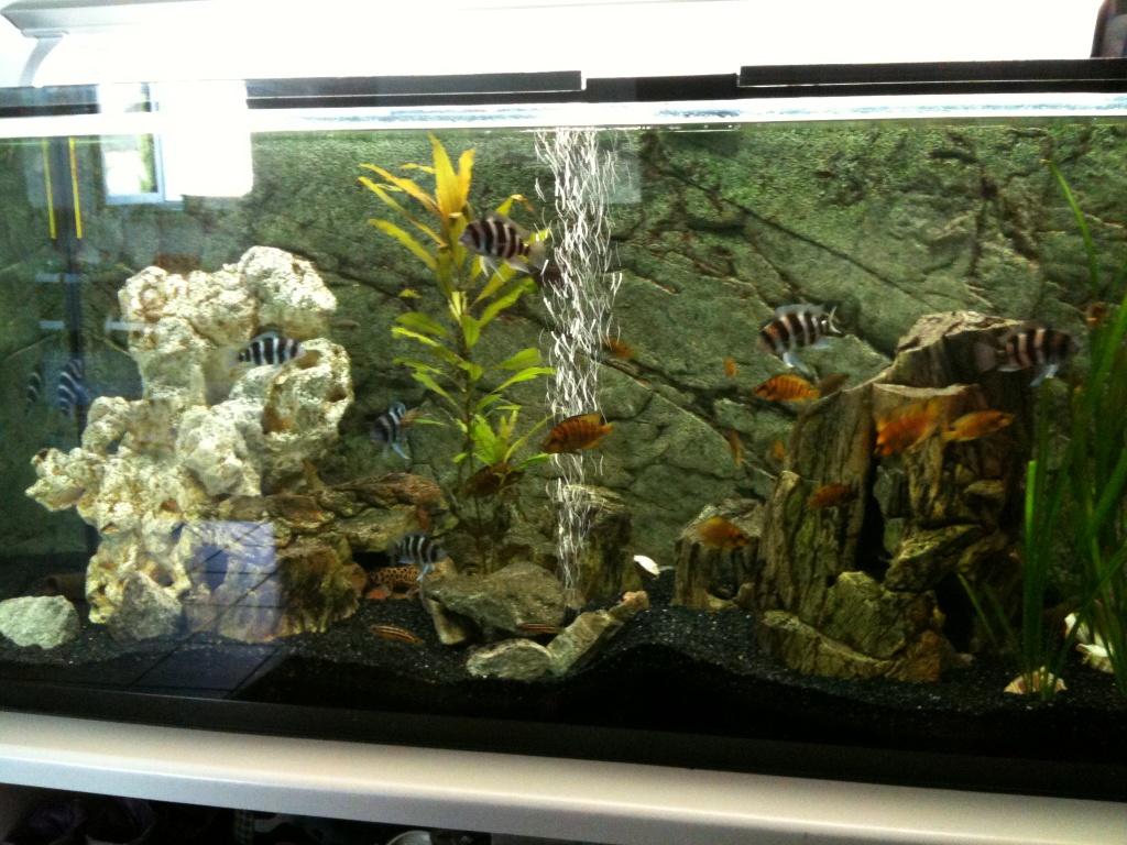 Was alle Fische sind Bodenfeeder