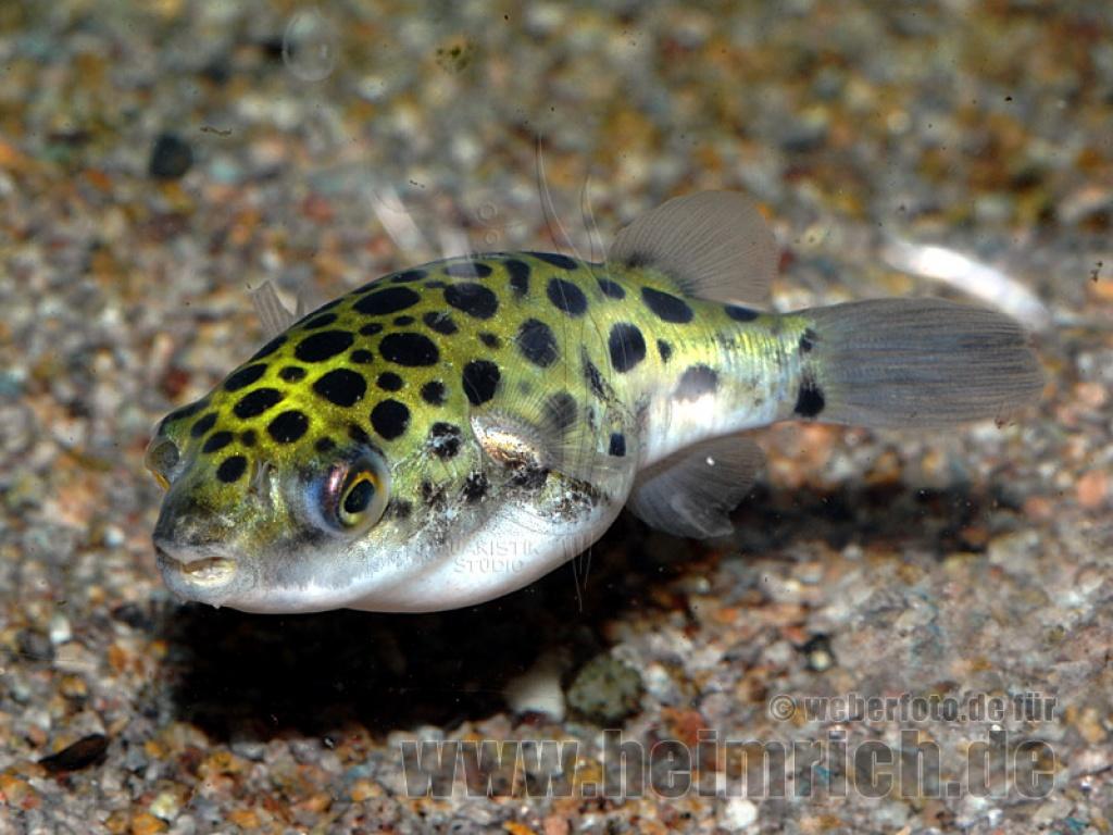 Fische fische sonstige tieranzeigen seite 3 for Fische im naturteich