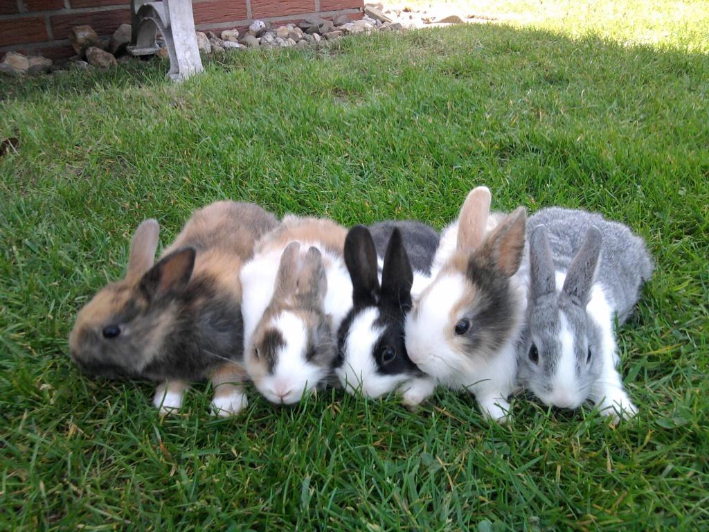 kleine s e baby kaninchen zu verkaufen kaninchen. Black Bedroom Furniture Sets. Home Design Ideas