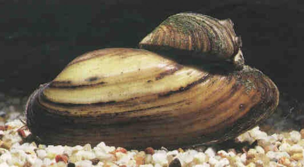 Tieranzeigen teichfische kleinanzeigen for Teichfische arten
