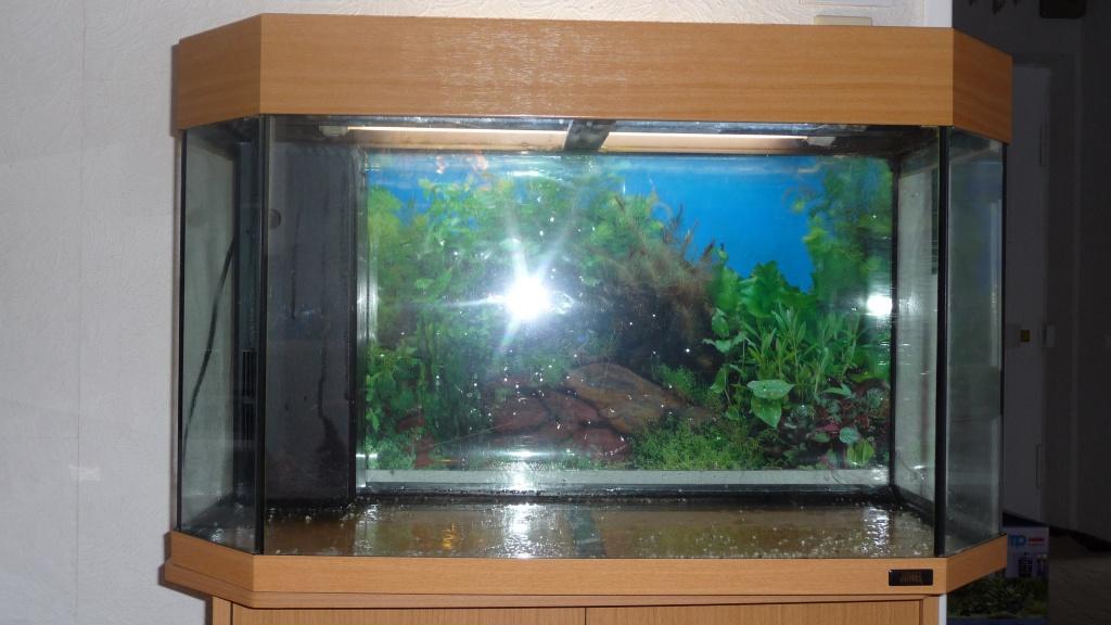 Aquarium komplett panorama 80 von juwel aquarien for Aquarium 80 litres