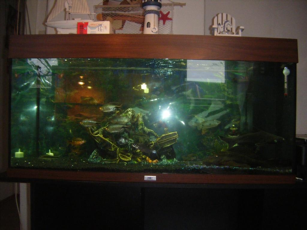 fische aquarien tieranzeigen seite 4. Black Bedroom Furniture Sets. Home Design Ideas