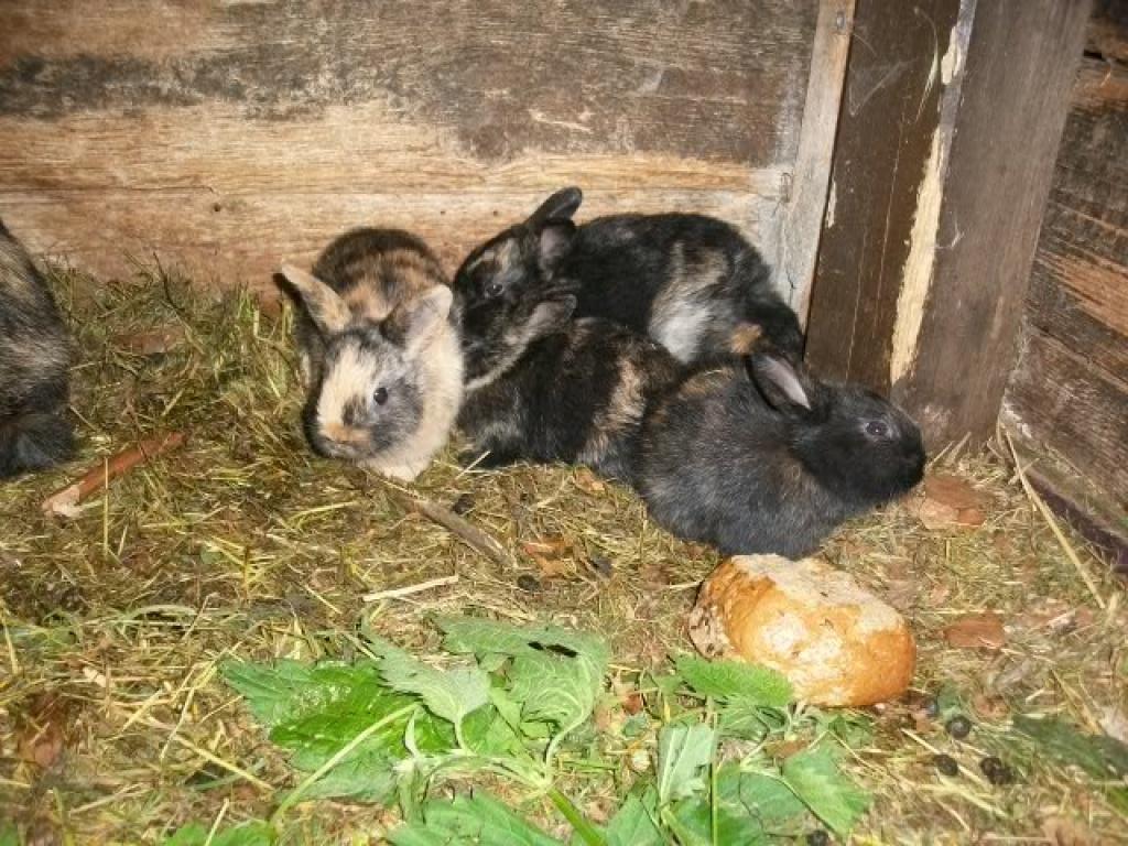 nagetiere kaninchen tieranzeigen seite 12. Black Bedroom Furniture Sets. Home Design Ideas