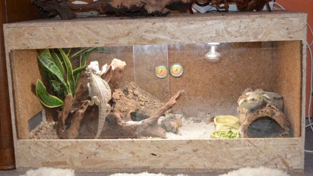 Terrarium Bartagame Pictures to pin on Pinterest
