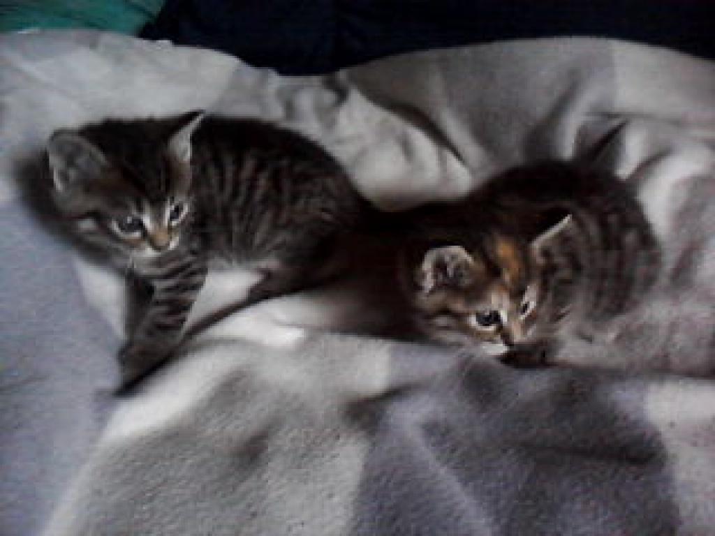 Tieranzeigen verschenken kleinanzeigen for Schlafsofa zu verschenken berlin