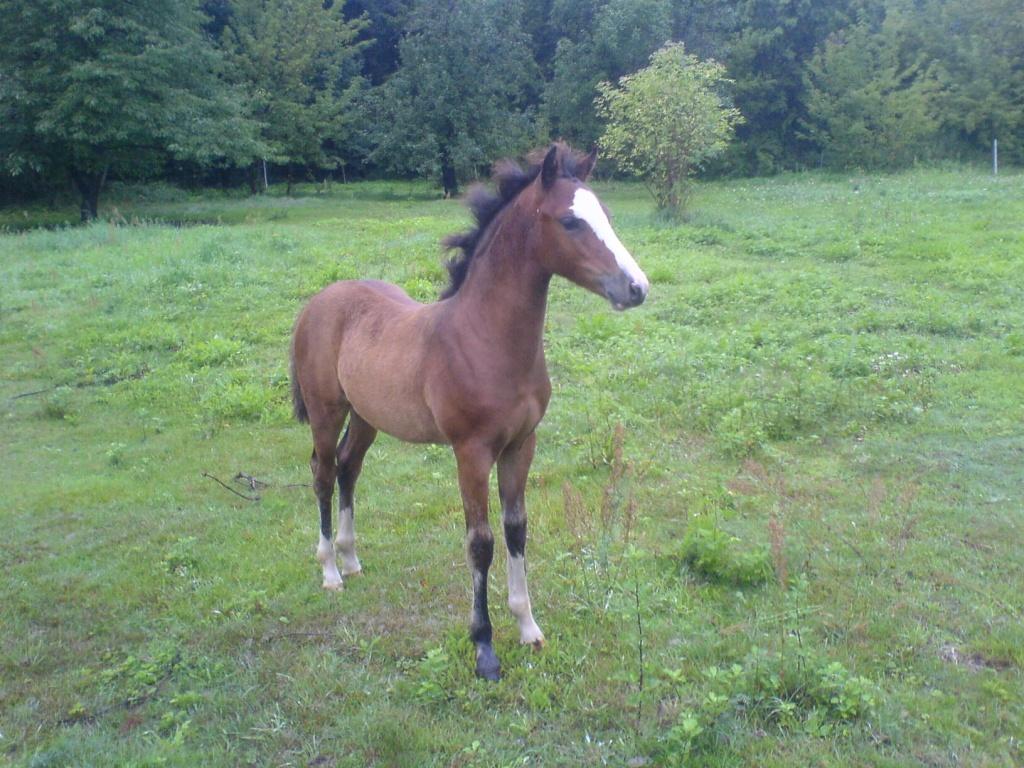 pin pferde fohlen nachwuchs tiere natur on pinterest ~ Wasserkocher Zu Verschenken