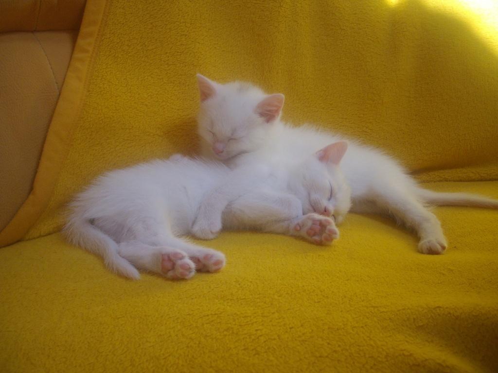 Tieranzeigen Katzenbabys Kleinanzeigen
