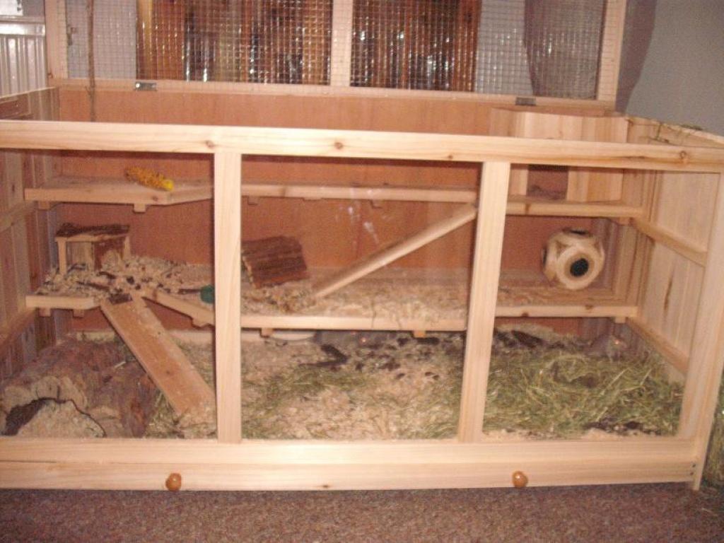junge rennmausgruppe mit grossem k fig abzugeben m use. Black Bedroom Furniture Sets. Home Design Ideas