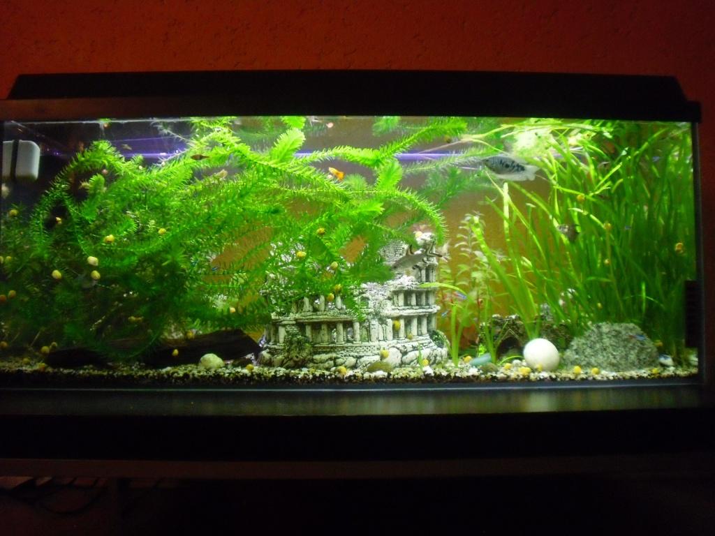 gro es 300 liter aquarium inkl neuer pumpe f r 120 euro. Black Bedroom Furniture Sets. Home Design Ideas