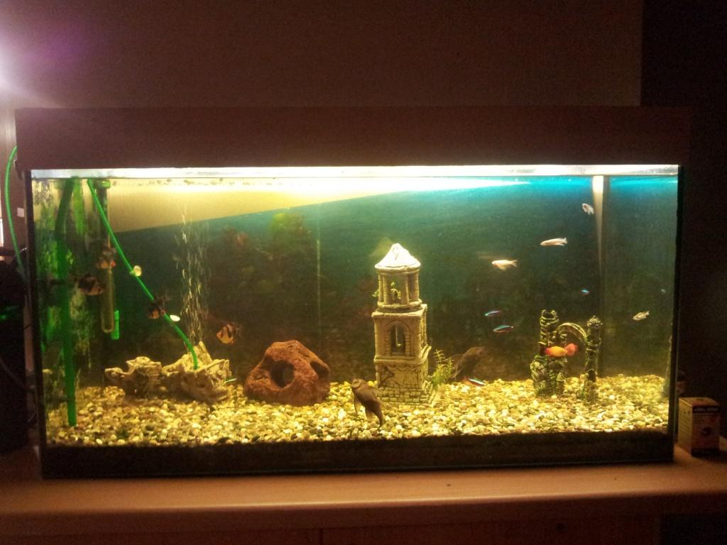 fische aquarien tieranzeigen seite 1. Black Bedroom Furniture Sets. Home Design Ideas