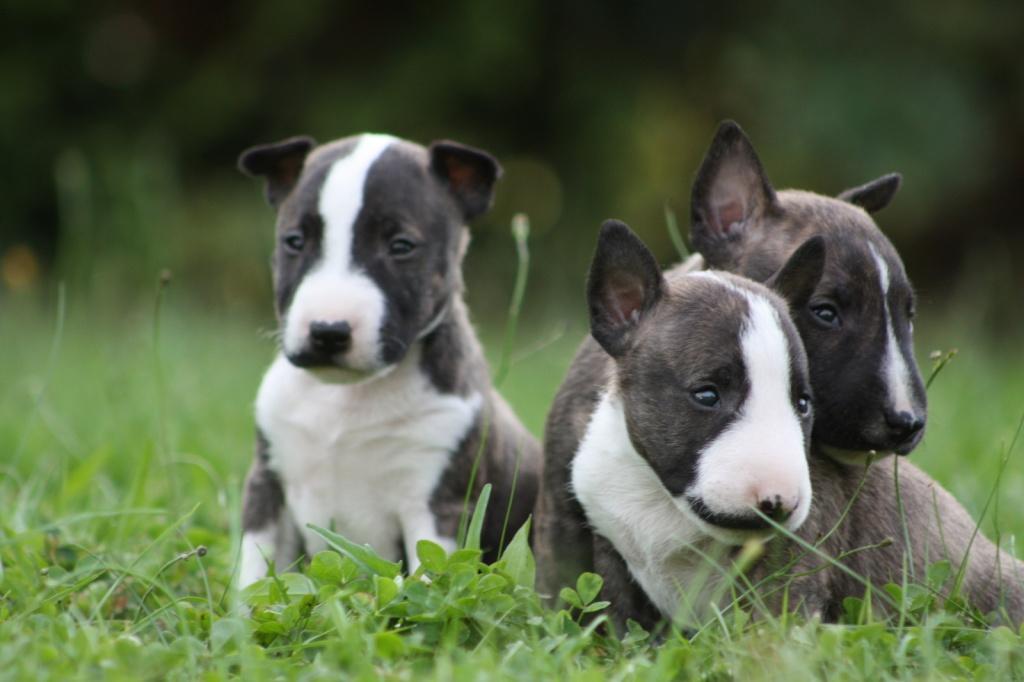 Baby Pitbull Dog Food
