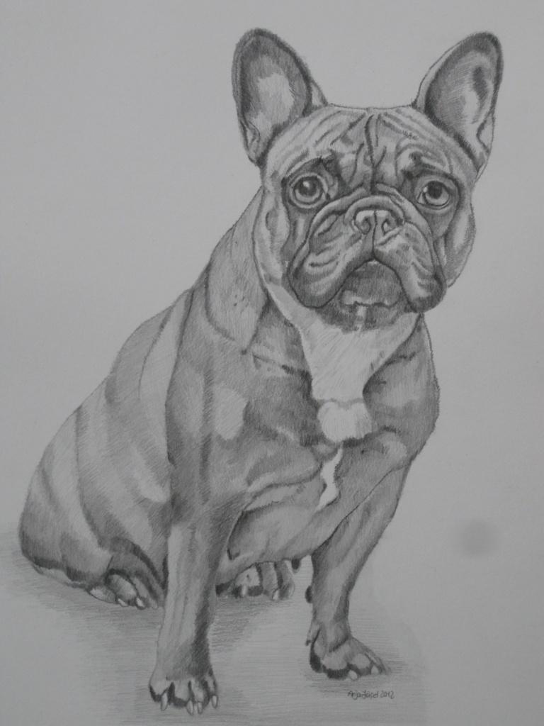 Zauberhafte Detailgetreue Hundeportraitsdie Man Sich Leisten