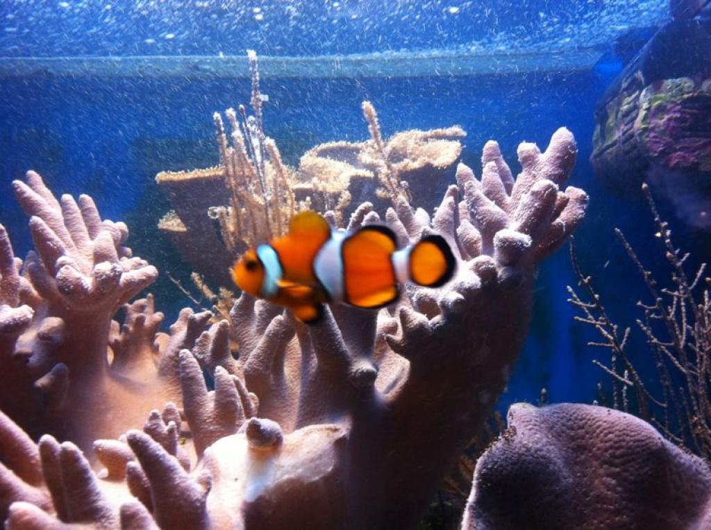 Tieranzeigen salzwasser kleinanzeigen for Salzwasser aquarium fische