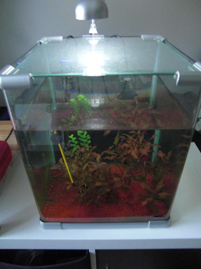 fische aquarien tieranzeigen seite 2. Black Bedroom Furniture Sets. Home Design Ideas