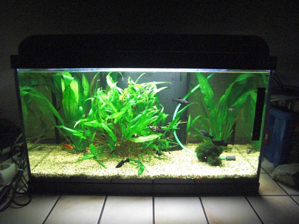 Innovativ Aquarium Fische Liter Becken: Fische mögens warm die richtige  EP53