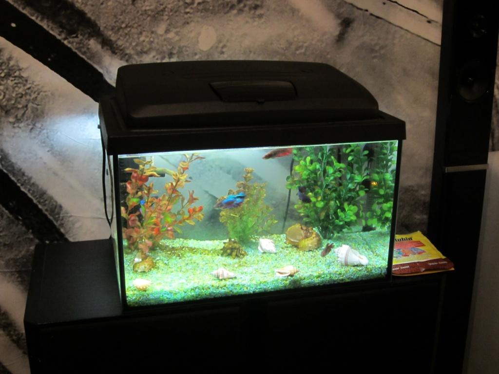Tieranzeigen kampffisch kleinanzeigen for Kampffisch aquarium