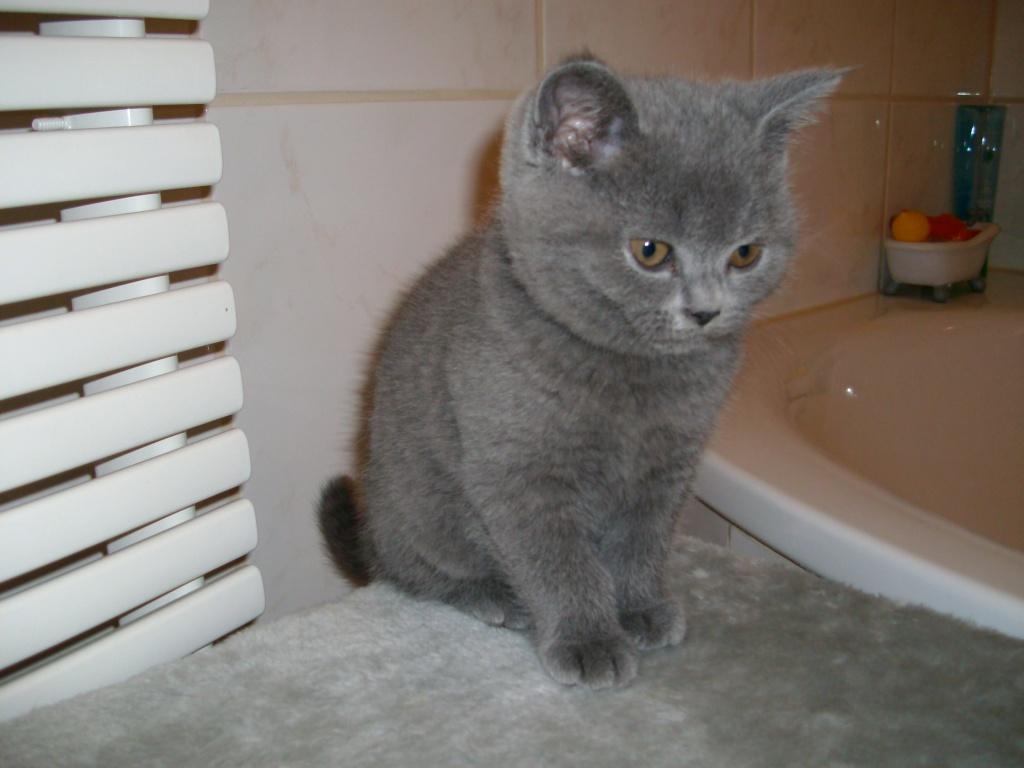 Katzen Rassekatzen Kart 228 User Tieranzeigen