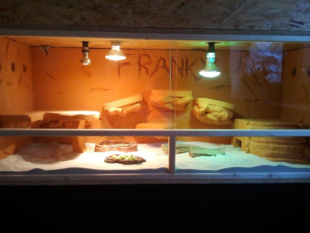 Bartagame Terrarium Licht : M?nnl Bartagame Terrarium abzugeben Reptilien Bartagame