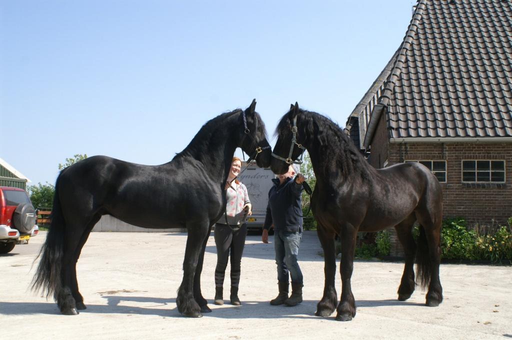 super e pferd