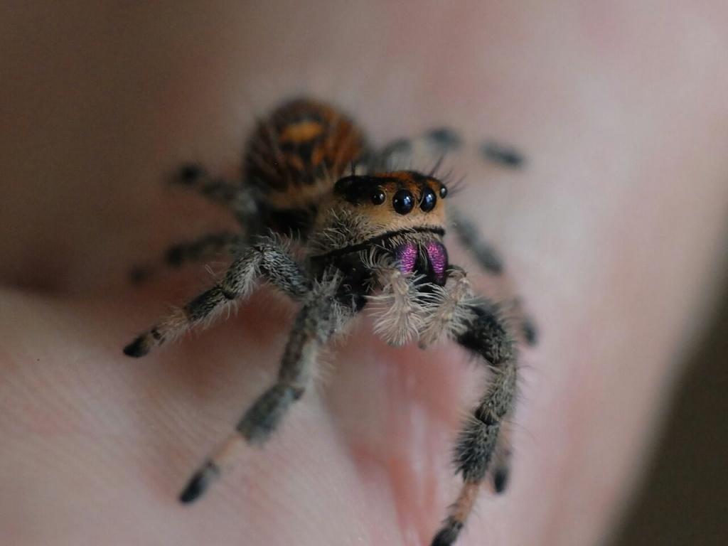 insekten spinnen tieranzeigen. Black Bedroom Furniture Sets. Home Design Ideas