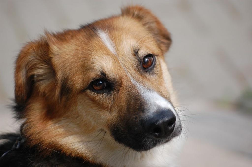 Singlebörse Hunde - Partnersuche Singles Kontaktanzeigen